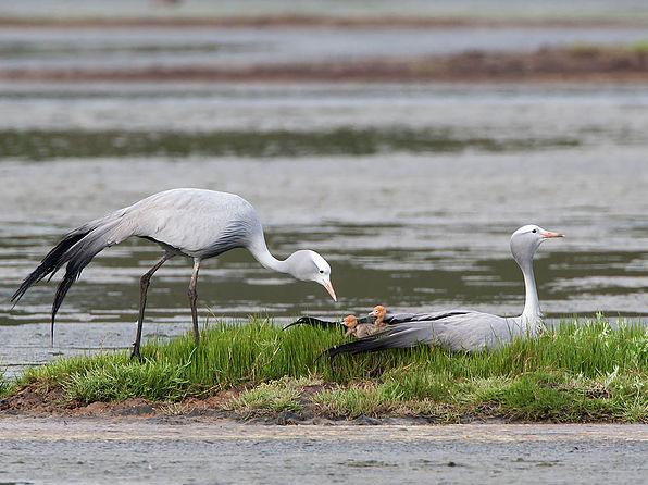 Birders-walk