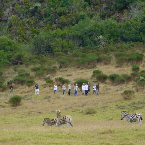 Giraffeview 3km