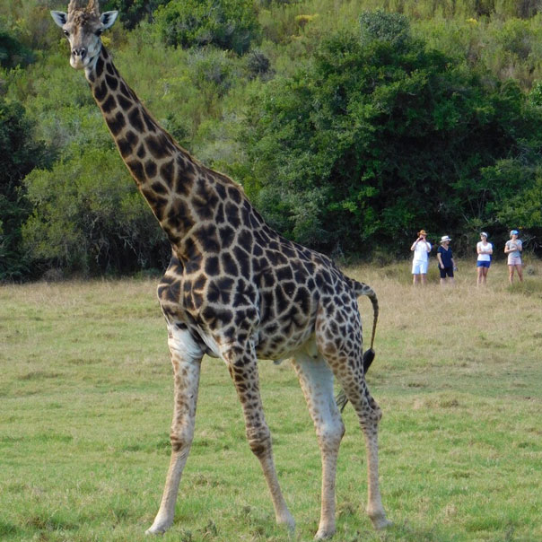 Giraffeview